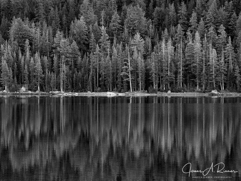 Tree Reflections, Tenaya Lake, Yosemite, CA, 2012